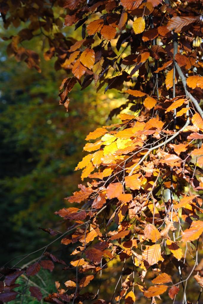 Herbstimpressionen 6