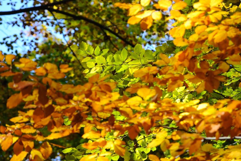 Herbstimpressionen 4